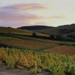 Beaujolais-vineyard-1024x833