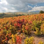 Autumn vineyards in Beaujolais France