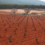 Vineyards in Campo de Borja